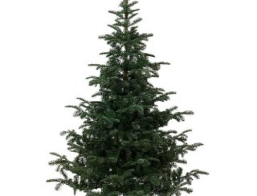 Christmas Trees are now in stock!