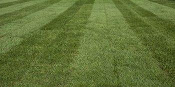 Premium Turf lawn